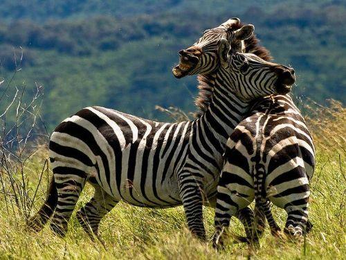 fotografias animales