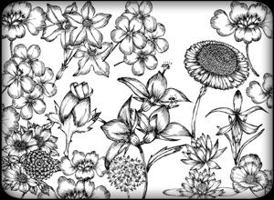 Pinceles de flores hechos a mano para Photoshop
