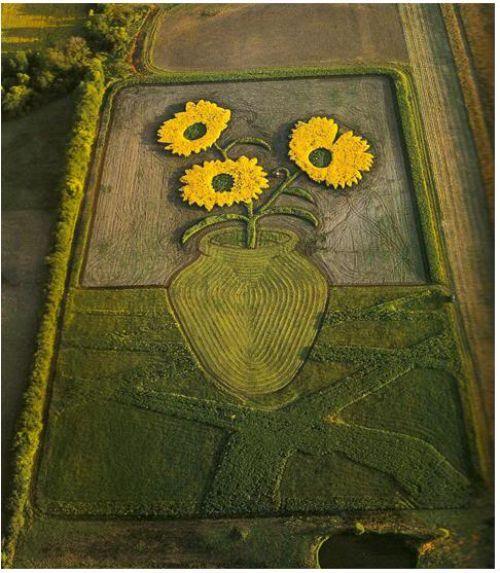 obras arte cultivo