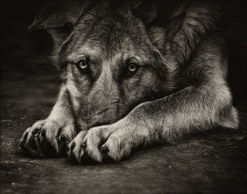arte animales increible