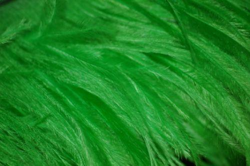 plumas textura