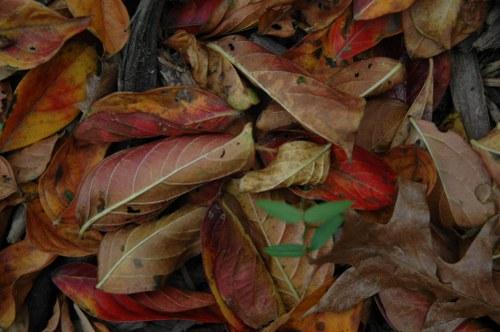 textura otoño