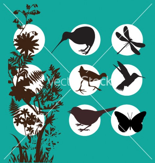 Vector aves