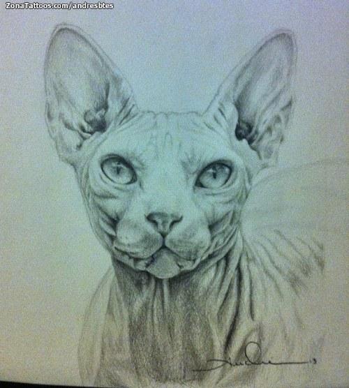 gato sphynx