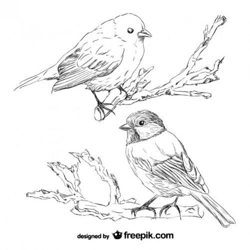 vector sketch pajaros illustrator