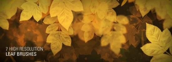pinceles hojas otoño alta resolucion photoshop