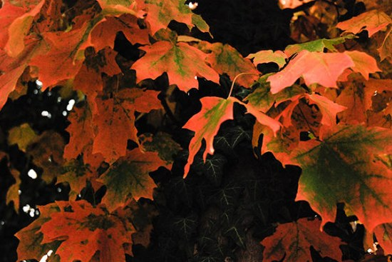 texturas hojas naranjas otoño photoshop