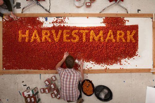 tomates logo