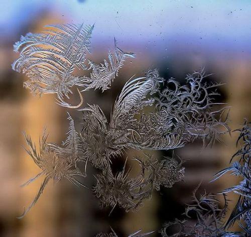 arte-copos-nieve