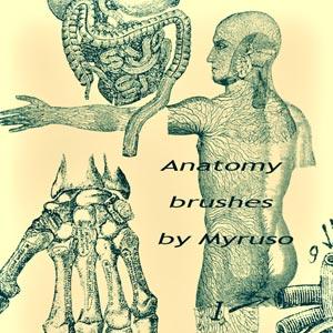 pinceles cuerpo humano
