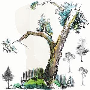 pinceles naturaleza
