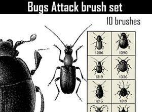 insectos pinceles