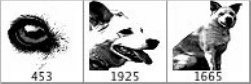 pinceles perros