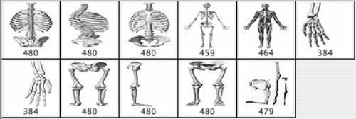 pinceles huesos