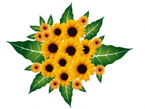 vector girasoles bouquet