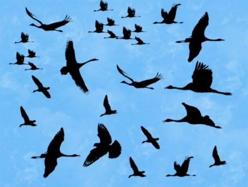pinceles siluetas aves